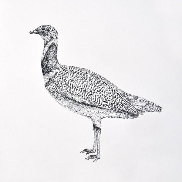 Pen Illustration of a bird