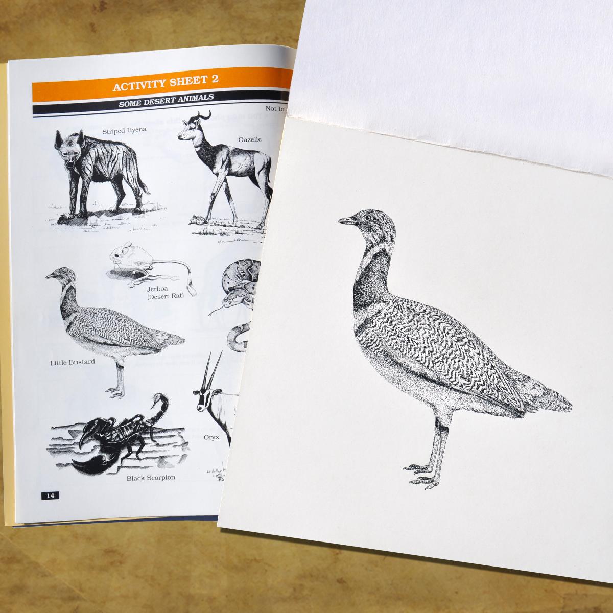 A pen illustration by Intrepid Design Associates